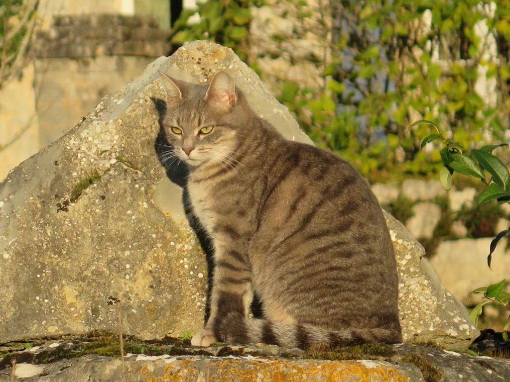Adoptons la sagesse du chat